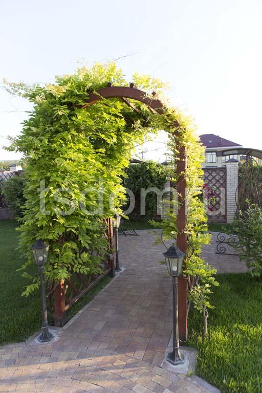 Декоративная арка из дерева окутанная лозой